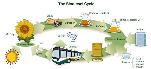 Biodiesel e biolubrificanti